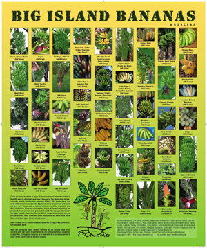 Poster of 50 varieties  of hawaii bananas