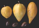 Eggfruit click to Enlarge