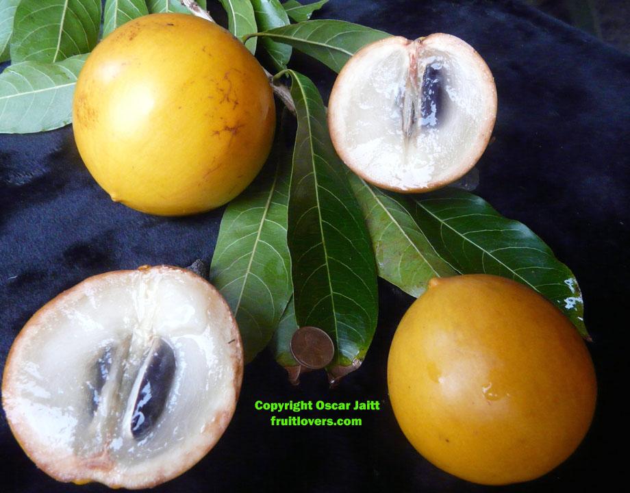 Plantation d'arbre fruitier  AbiuCrossection
