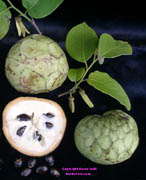 Cherimoya click to Enlarge